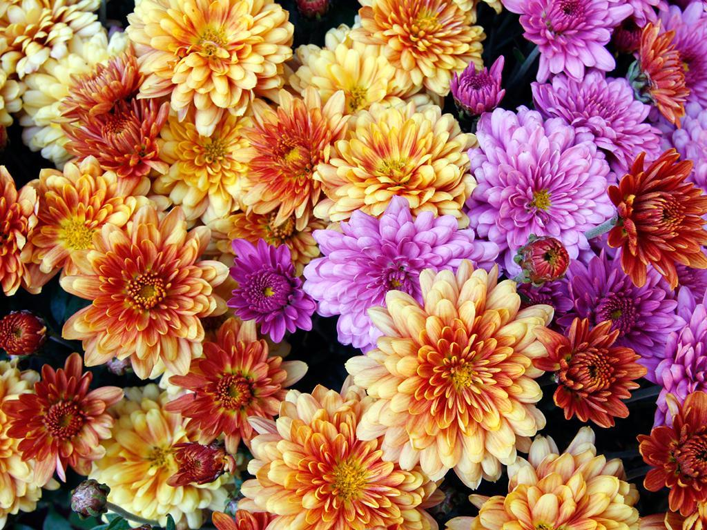 fiori_neutri