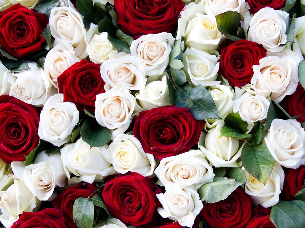 fiori_rose